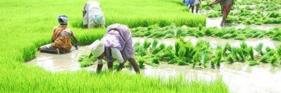 Agriculture in Telangana